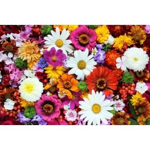 Çeşit Çeşit Çiçekler
