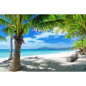 Palmiye ve Gölgesi
