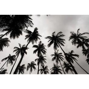 Siyah Beyaz Palmiyeler