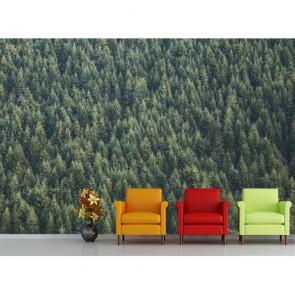 Bitişik Çam Ağaçları Manzara Duvar Kağıdı Modeli