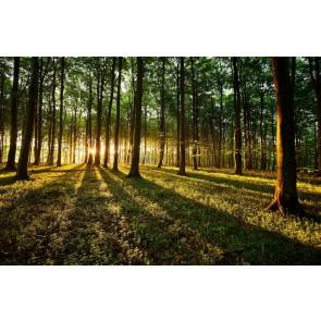 Işıltılı Orman