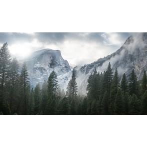 Yosemite National Park Orman ve Kar Manzarası