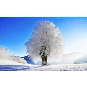 Özel Kış Ağacı Doğa 3D Duvar Kağıdı