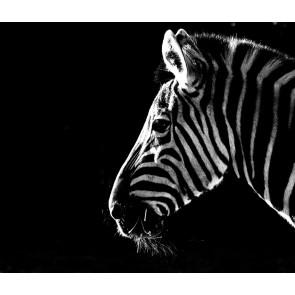 Zebra 3 Boyutlu Resimli Duvar Kağıdı Önizleme