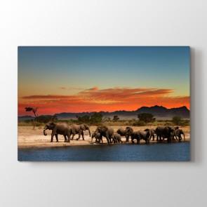 Filler Molada - Vahşi Yaşam Kanvas Tablo Modeli