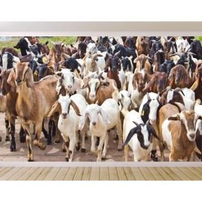 İnatçı Keçiler Duvar Kağıdı