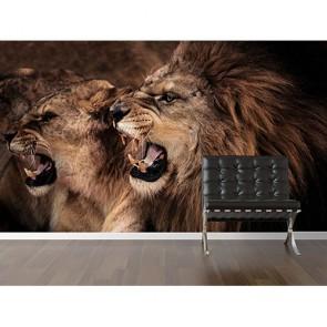 Kükre Aslanım - Resimli Duvar Dekorasyonu