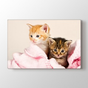 Kedi Yavruları - Vahşi Yaşam Duvar Dekor Kanvas Tablo