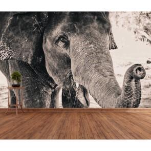 Siyah Beyaz Fil 3 Boyutlu Duvar Kağıdı