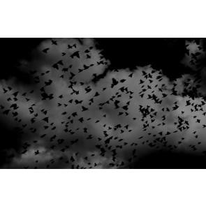 Kara Kuşlar