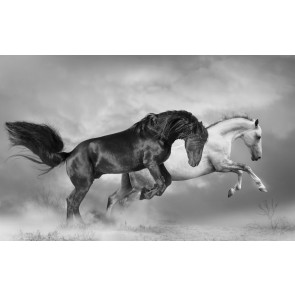 Atlar Şaha Kalktı