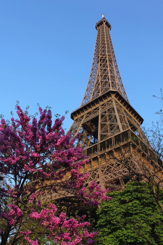 Eiffel'in Çiçekleri Duvar Kağıdı